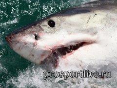 А вы боитесь акул?